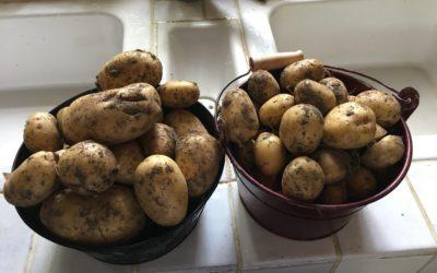 Pommes de terre confites à ma façon